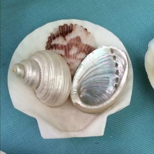 Seashell Scallop or Clam Collage KITCHEN MAGNET